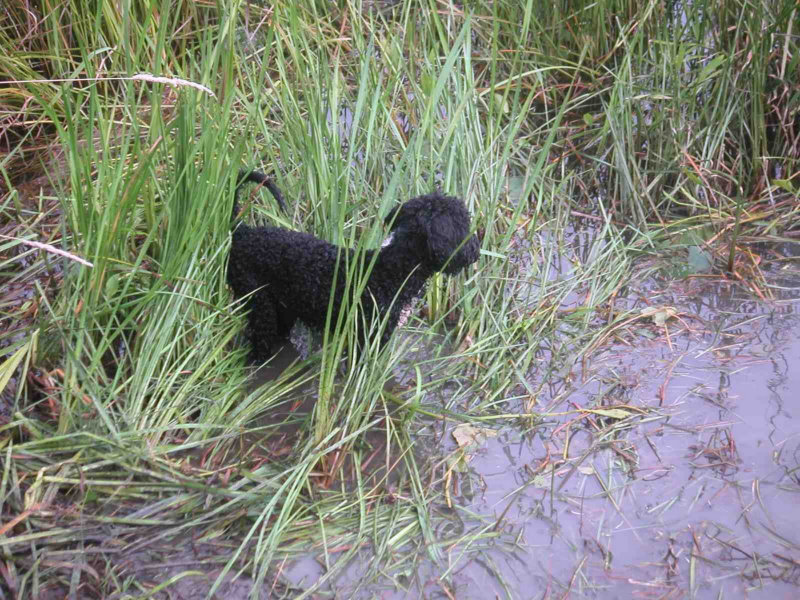 Django in the river grass
